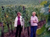 Summer in Alsace France -In the Vineyard
